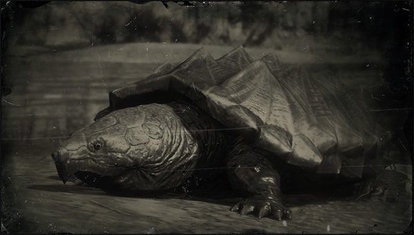 alligator_snapping_turtle-min