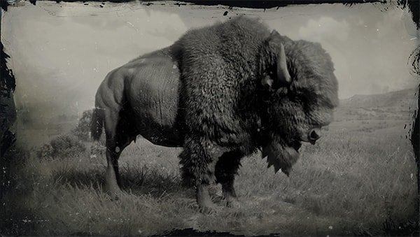american_bison-min
