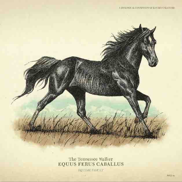 the_tennessee_walker